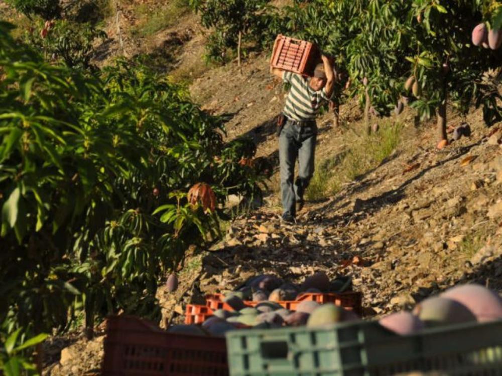 Trabajo de agricultor