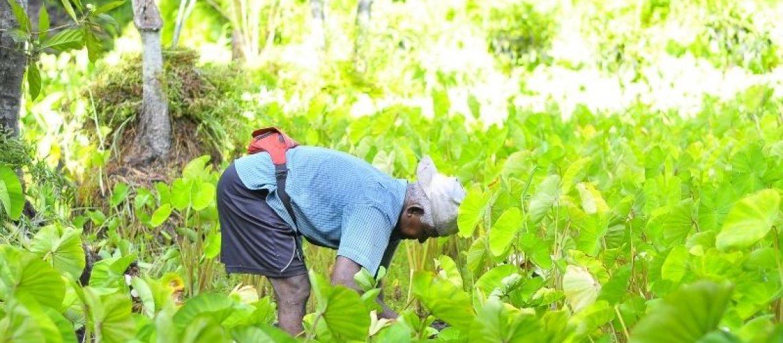foto de portada agricultor 0